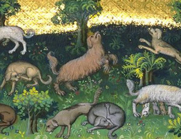 alimentazione cani medioevo