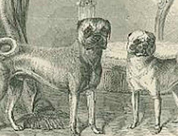 pug dog club