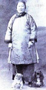 Fotografia di un antico carlino cinese e di un pechinese