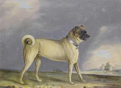 cane carlino raffigurato nell'arte del XIX