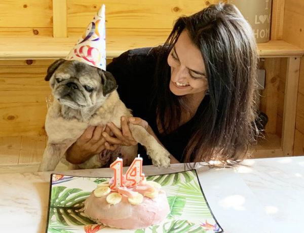 torta per cani senza cottura