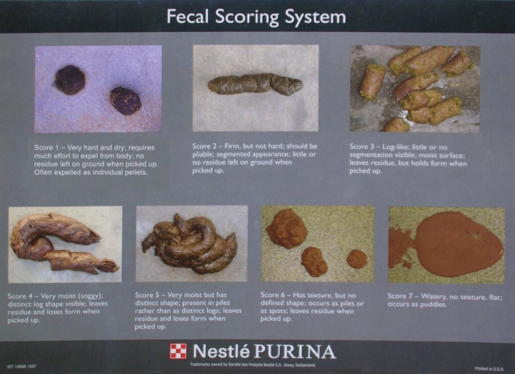 Il cane ha diarrea fecal score sistem
