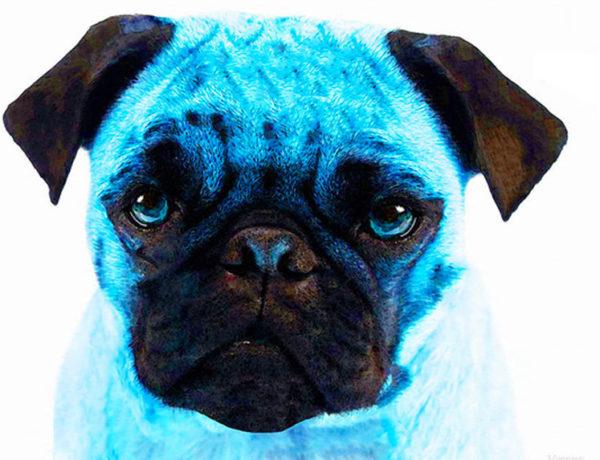 il carlino blu