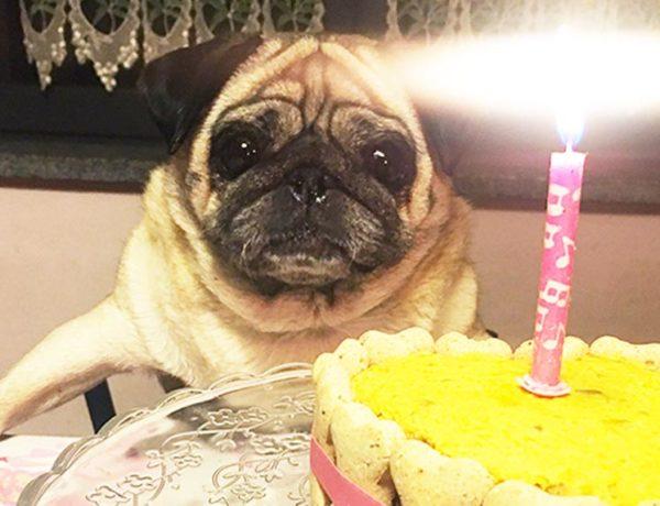 torta di compleanno polpettone