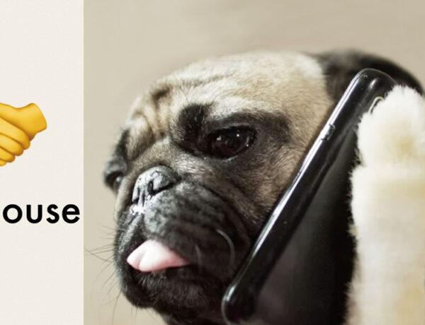 Guida Clubhouse animali